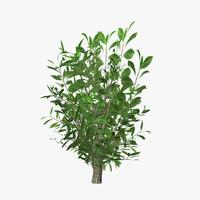 3d plant 11 model