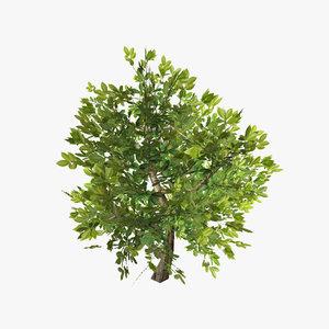 plant 13 x