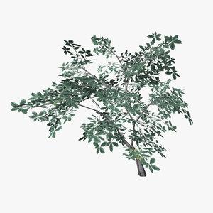 3ds max plant 12