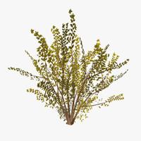 3d model of plant 15