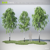 ArchTrees Birch collection