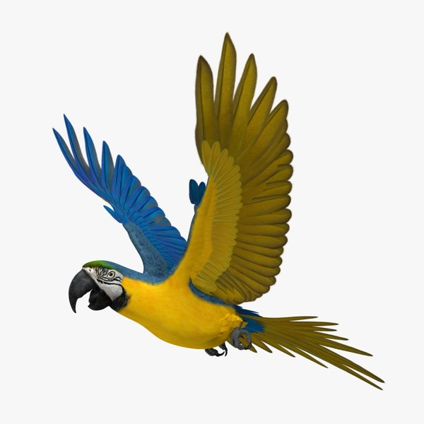 ara ararauna blue-and-yellow macaw obj