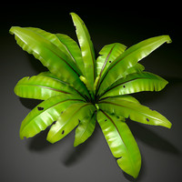 3d model of plant bird nest fern