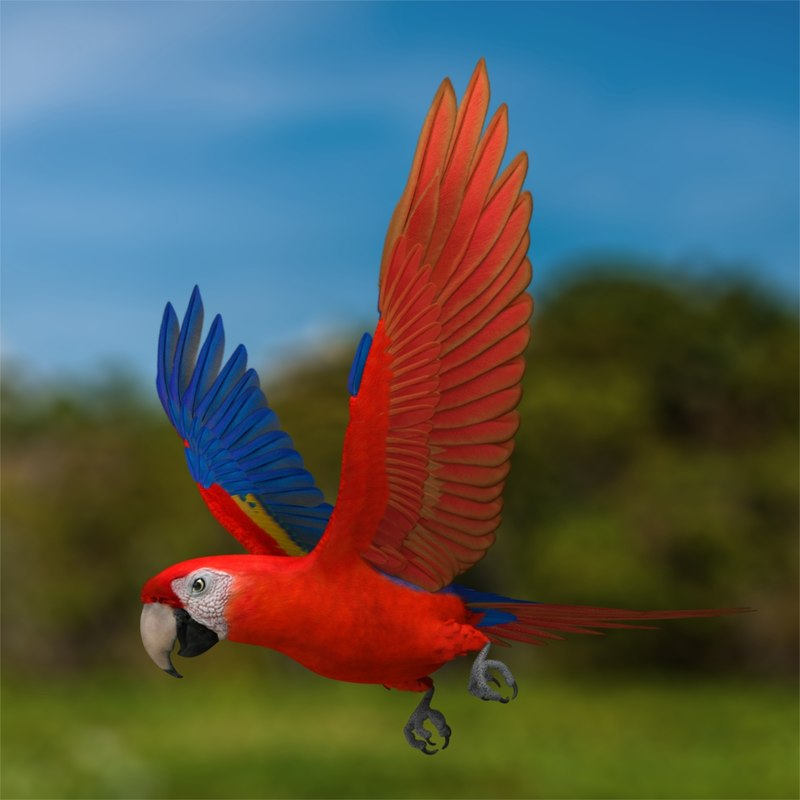 obj ara macao scarlet macaw