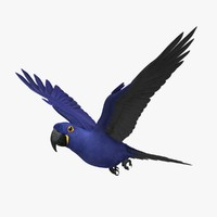 Anodorhynchus Hyacinthinus 'Hyacinth Macaw Parrot'
