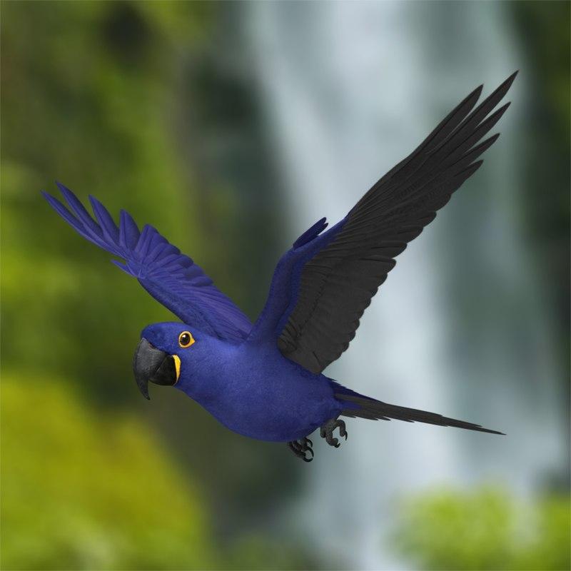 anodorhynchus hyacinthinus hyacinth macaw 3d obj
