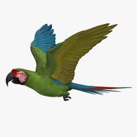 ara militaris macaw parrot 3d obj