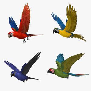 3d macaw parrots