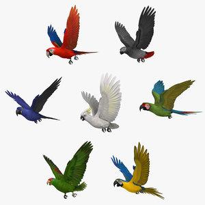 maya parrots animation ara