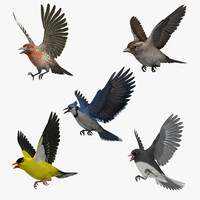 3d model american backyard birds