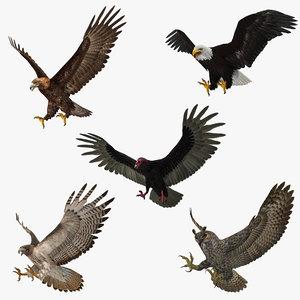 3d model birds prey