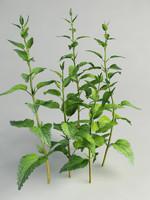 3ds max nettle plant