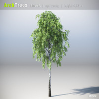 ArchTrees Birch (A)