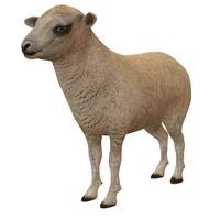 sheep ma
