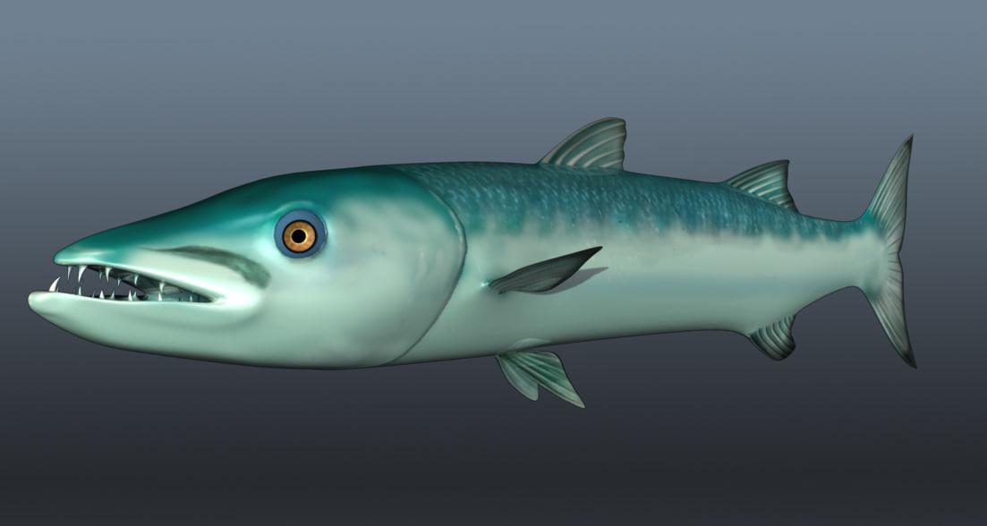 3d barracuda fish model