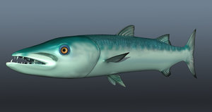 3d barracuda fish model