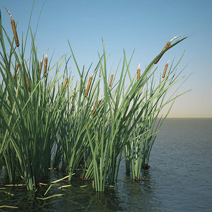 3d typha common bulrush