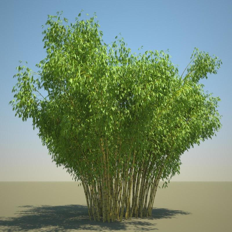 3d model bambusa golden bamboo set