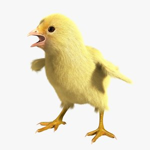 chick animation 3d model