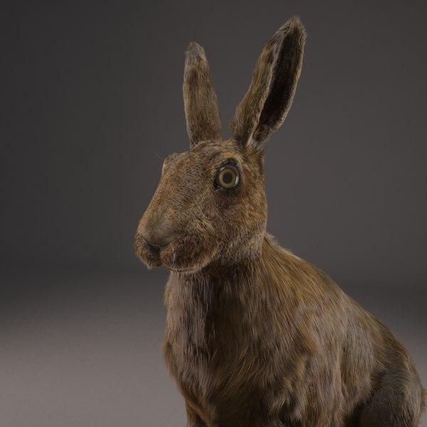 realistic hare x