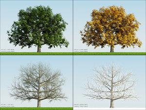 3dsmax 4 season tree oak002