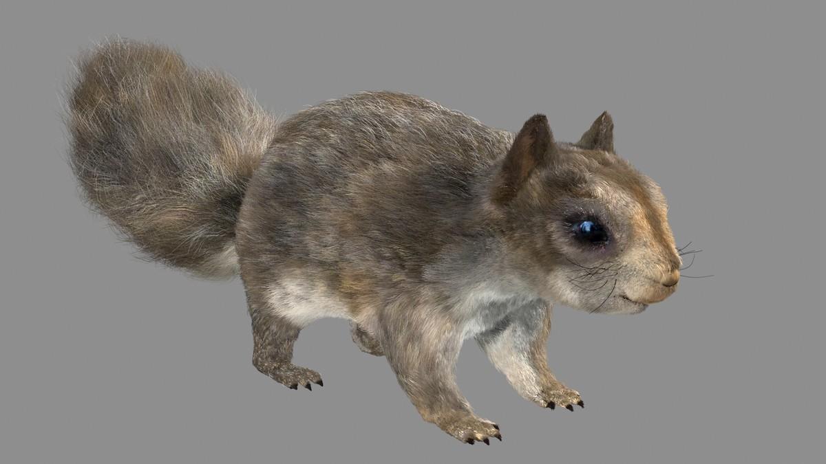 3d squirrel fur hair model
