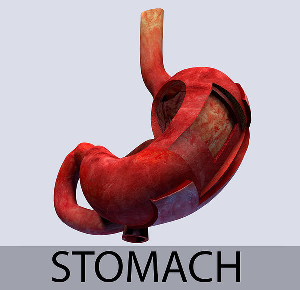 stomach leyer 3ds