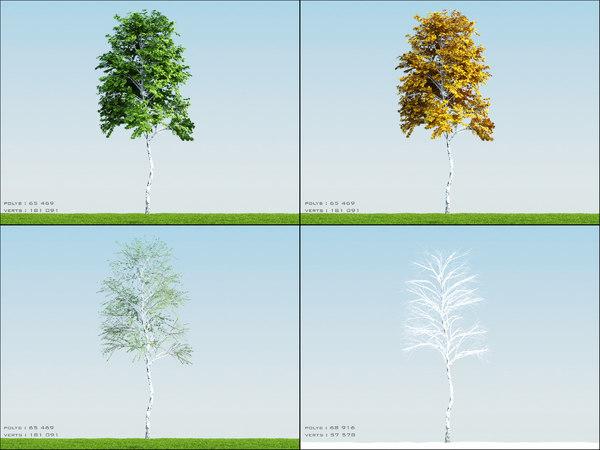 3d model 4 season tree birch001