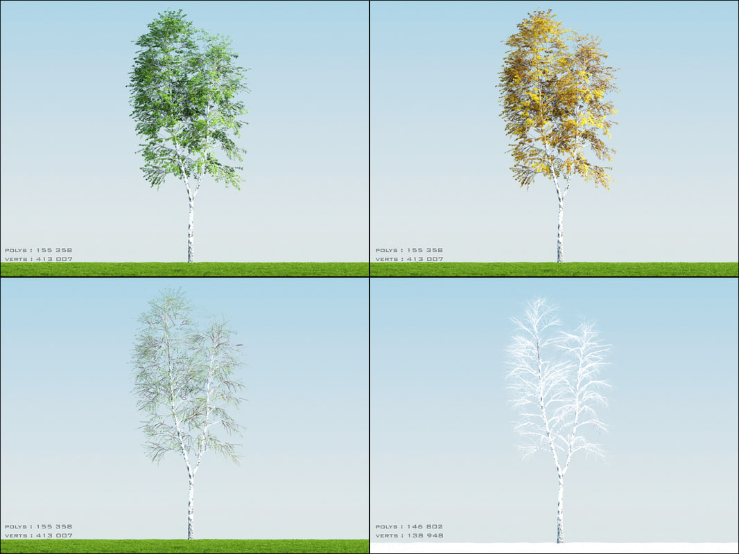 3ds max 4 season tree birch002