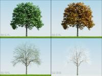 4 season tree ash001 3d max