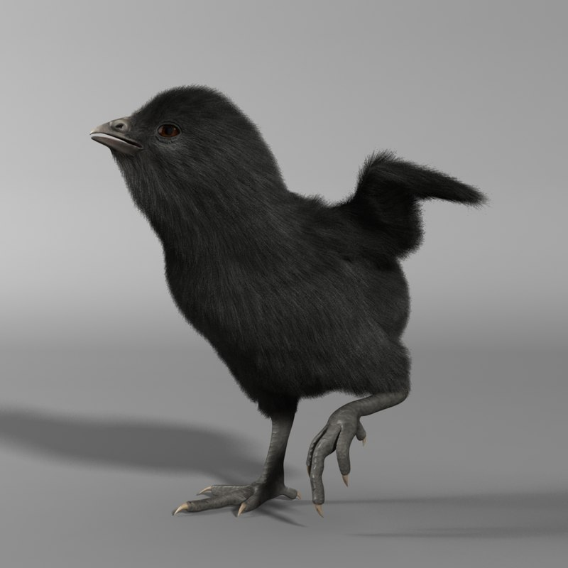 3d model of black chick