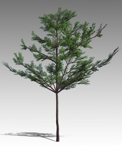 3d tropical almond terminalia