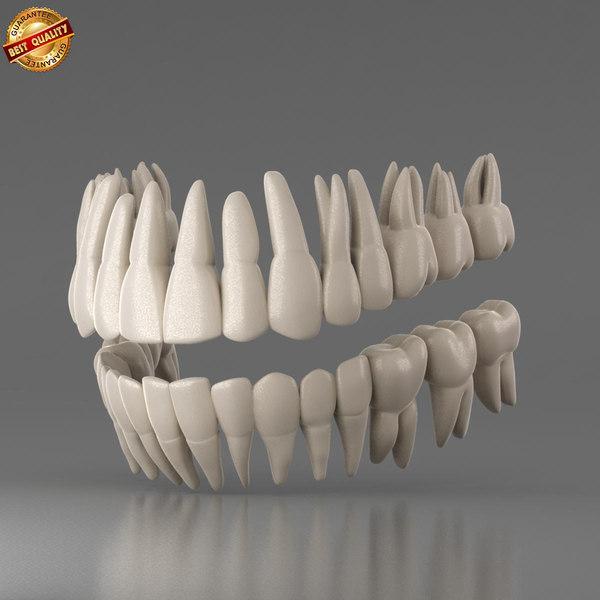 human teeth obj