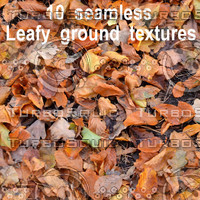 Leafy Ground Collection 1