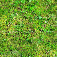 Mossy ground with clover 1