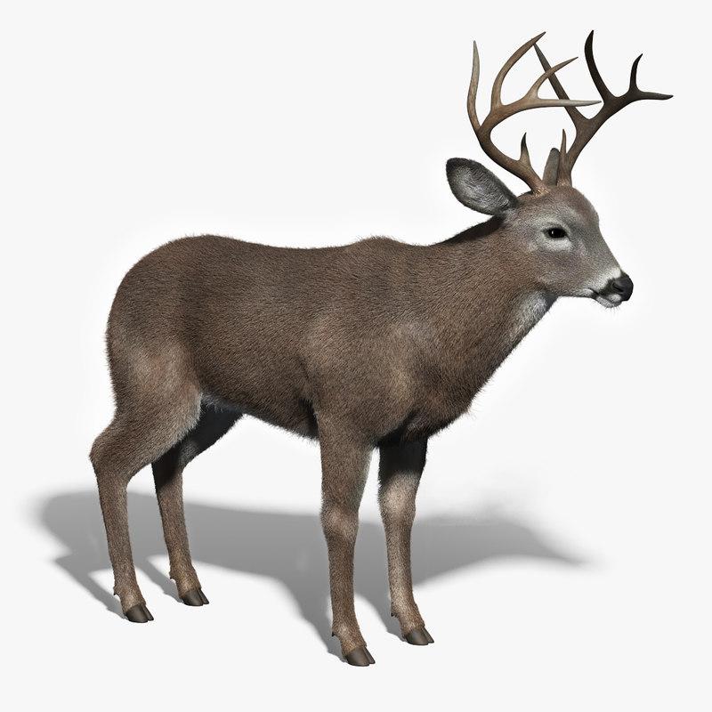 3d white tailed deer fur model
