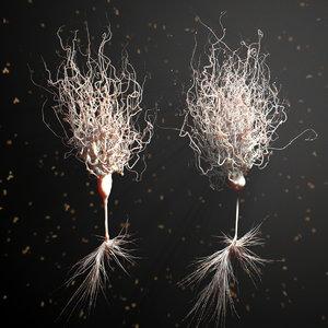 3d model neurons details