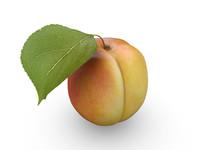 apricot leaf 3d model