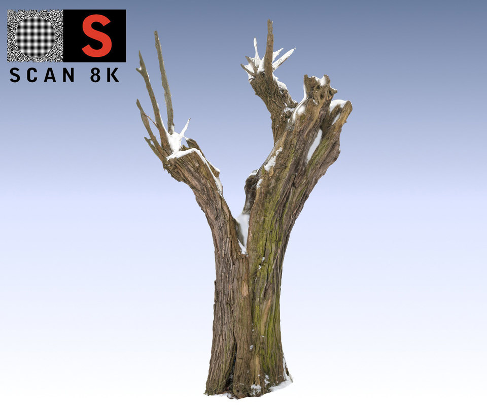 willow snow 3d model