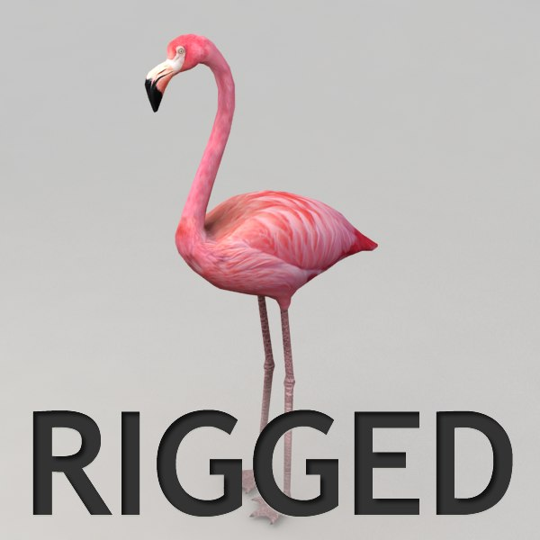 3d flamingo rigged model