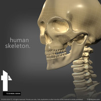 3ds human skeletal