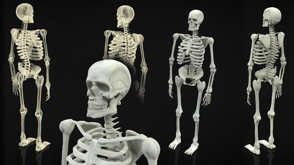skeleton body 3d obj