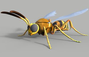 max cicada killer