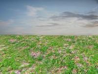 Rough grass 1