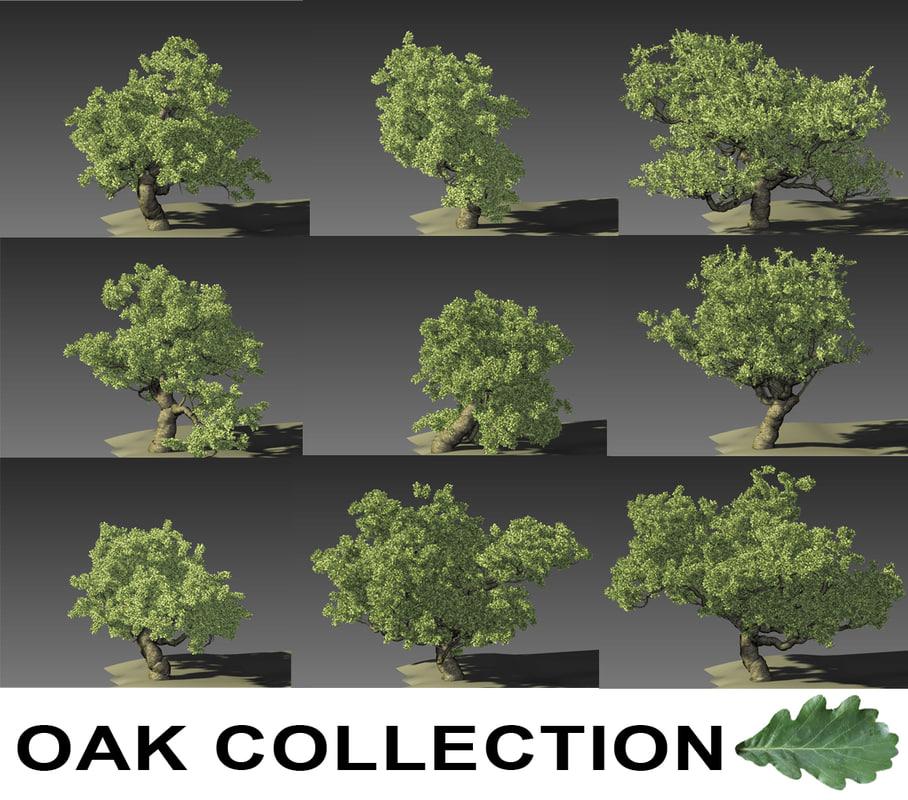 max oak trees