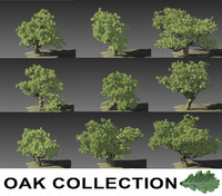 Oak Collection