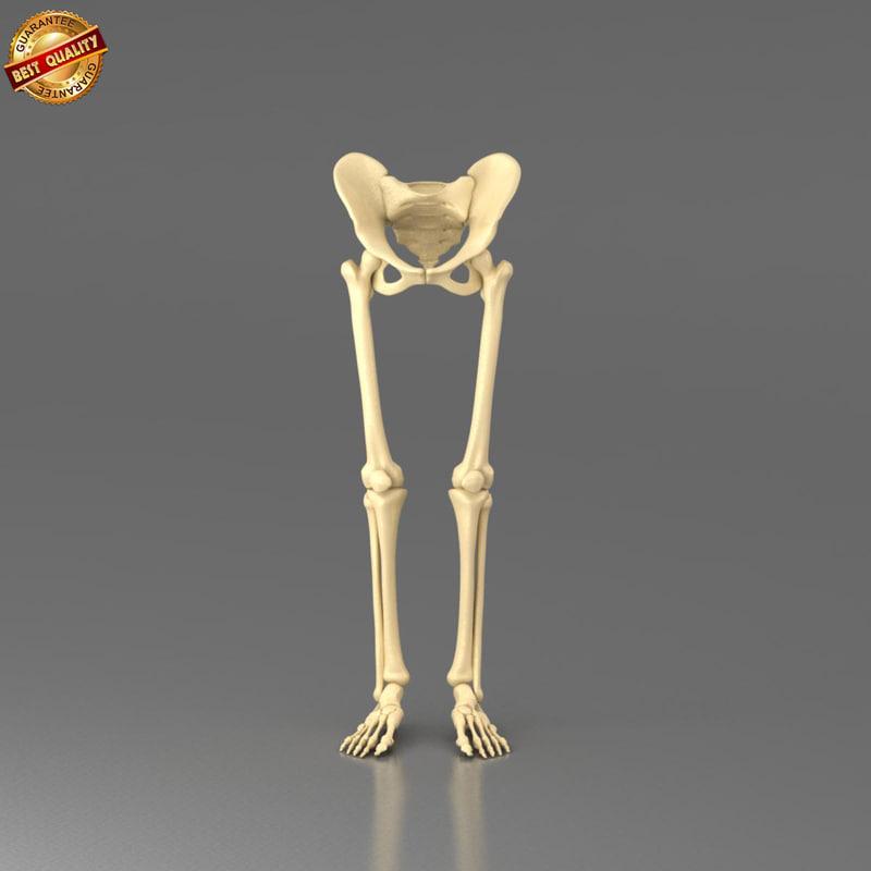 3d anatomy medical