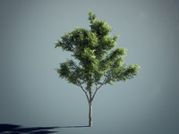 HQ generic tree 01