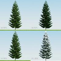 Pine002