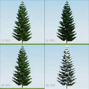 season tree pine002 3d model